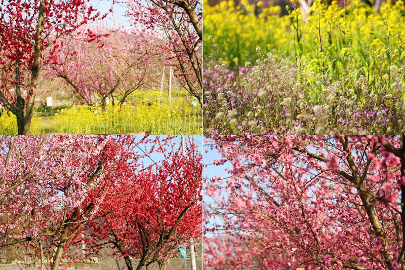 桃の花まつり