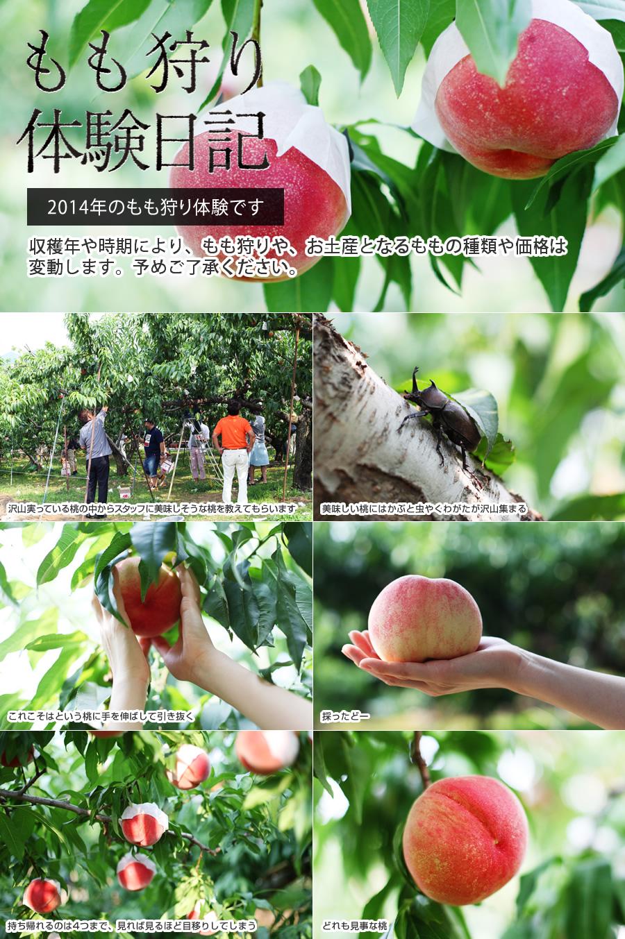 金桜園のもも狩り体験日記